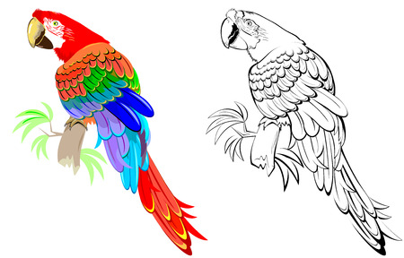 Colorful and black and white pattern parrot. Stock Illustratie