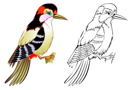 Kleurrijke en zwart-witte patroonspecht, vectorbeeldverhaalbeeld.