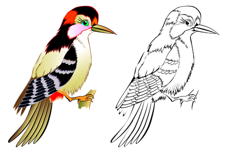 Colorful and black and white pattern woodpecker, vector cartoon image.