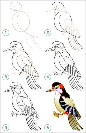 Pagina laat zien hoe je de stap leert om een specht te tekenen en de vaardigheden van kinderen voor tekenen en kleuren ontwikkelt.