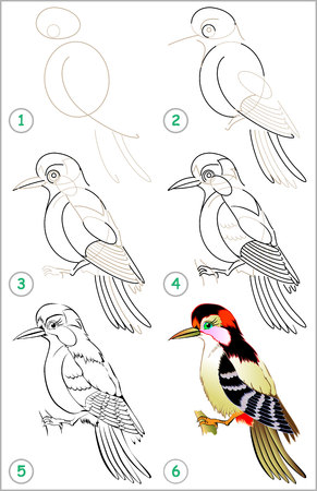 Page shows how to learn step to draw a woodpecker developing children skills for drawing and coloring. Illustration