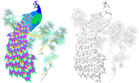 Colorful and black and white pattern for coloring. Illustration of beautiful peacock sitting on a pine branch. Worksheet for children and adults. Vector image.