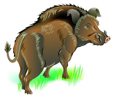 Illustration of wild boar, vector cartoon image. Ilustracja