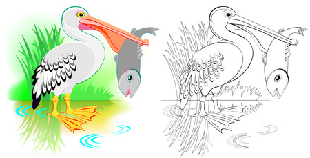 Colorful and black and white pattern for coloring. Cute pelican is fishing. Worksheet for children and adults.
