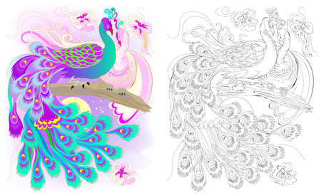 Colorful and black and white pattern for coloring. Fantasy drawing of peacocks couple. Worksheet for children and adults. Vector image.  イラスト・ベクター素材
