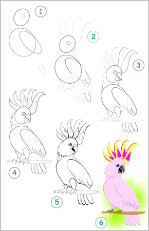 Page shows how to learn step by step to draw a cute little cockatoo parrot. Developing children skills for drawing and coloring. Vector image. 向量圖像