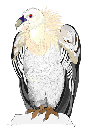 Fantasy illustration of cute vulture on white background. Hand-drawn vector image.