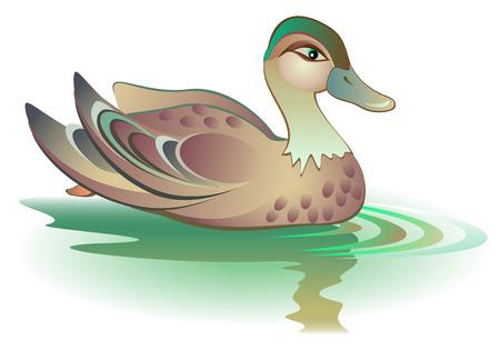 Illustration of swimming duck, vector cartoon image. Illustration