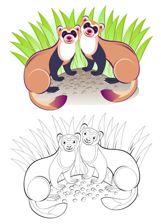 Fantasy illustration of couple cute ferrets. Colorful and black and white page for coloring book. Printable worksheet for children and adults. Vector cartoon image. Illustration