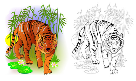 Fantasy illustration of cute tiger in the jungle. Colorful and black and white page for coloring book. Printable worksheet for children and adults. Vector cartoon image.