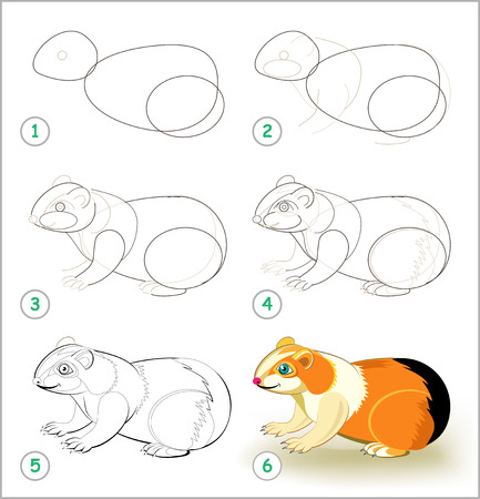 Educational page for kids shows how to learn step by step to draw a cute guinea pig. Back to school. Developing children skills for drawing and coloring. Vector cartoon image.