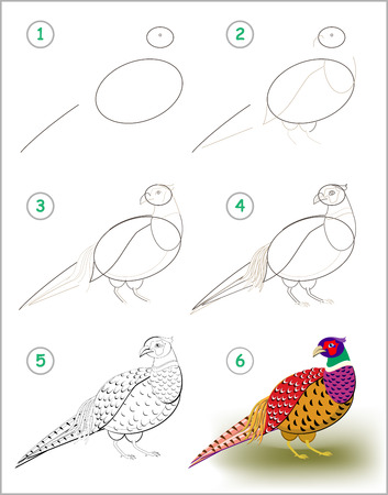 Educational page for kids shows how to learn step by step to draw a pheasant with bright feathering. Back to school. Developing children skills for drawing and coloring. Vector cartoon image.