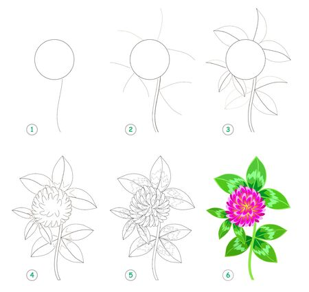 Page shows how to learn step by step to draw beautiful flower clover. Developing children skills for drawing and coloring. Printable worksheet for kids. Vector cartoon image.
