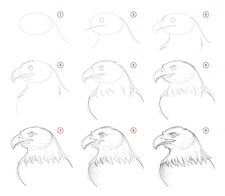 How to draw step-wise sketch of imaginary cute eagles head. Creation step by step pencil drawing. Educational page. School textbook for developing artistic skills. Hand-drawn vector image. Ilustração