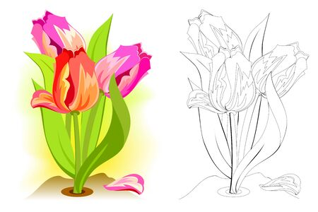 Colorful and black and white pattern for coloring. Illustration of spring tulip flowers in the garden. Greetings with women day. Worksheet for coloring book for children and adults. Vector image.