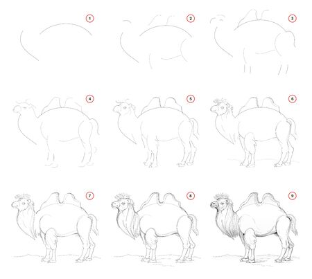 How to draw from nature step by step sketch of cute camel. Creation step-wise pencil drawing. Educational page for artists. School textbook for developing artistic skills. Hand-drawn vector image. Stock Illustratie