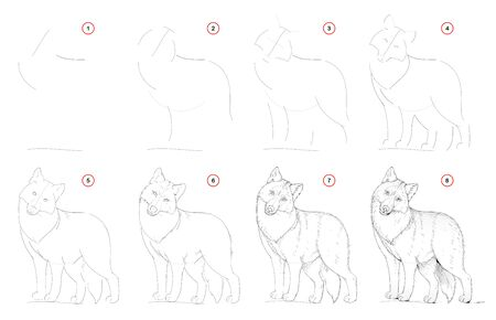 How to draw from nature step by step sketch of cute wolf. Creation step-wise pencil drawing. Educational page for artists. School textbook for developing artistic skills. Hand-drawn vector image.