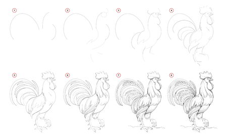 How to draw from nature step by step sketch of domestic roster. Creation pencil drawing. Educational page for artists. School textbook for developing artistic skills. Hand-drawn vector image.