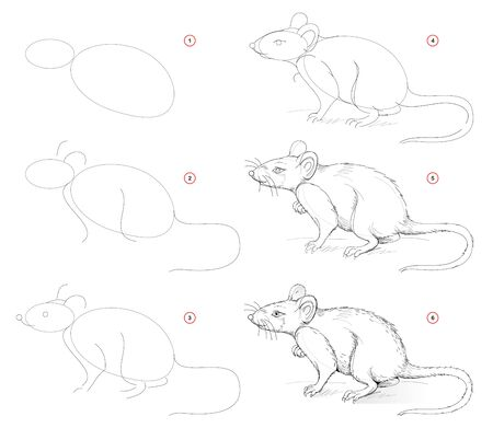 How to draw from nature sketch of cute rat. Creation step by step pencil drawing. Educational page for artists. School textbook for developing artistic skills. Hand-drawn vector image.
