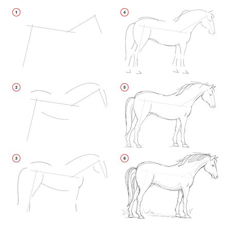 How to draw from nature sketch of standing horse. Creation step by step pencil drawing. Educational page for artists. School textbook for developing artistic skills. Hand-drawn vector image. Stockfoto - 135370304