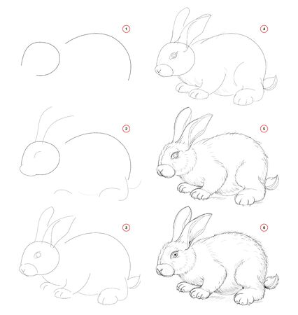 How to draw from nature sketch of cute little rabbit. Creation step by step pencil drawing. Educational page for artists. School textbook for developing artistic skills. Hand-drawn vector image. Stockfoto - 135370306