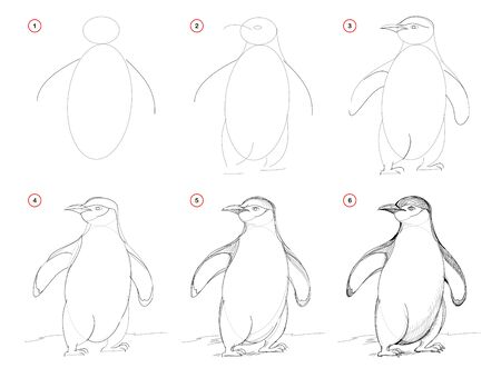 How to draw from nature sketch of cute penguin. Creation step by step pencil drawing. Educational page for artists. School textbook for developing artistic skills. Hand-drawn vector image. Stock Illustratie