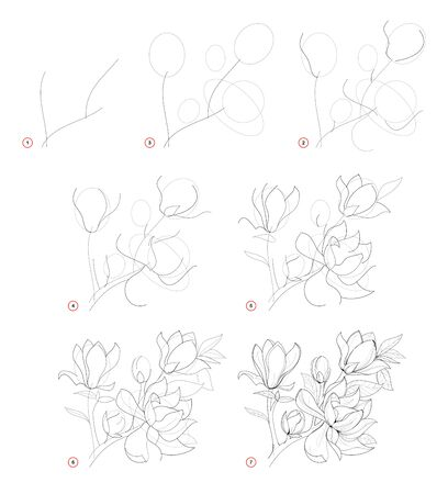 How to draw beautiful branch with magnolia flowers. Creation step by step pencil drawing. Educational page for artists. School textbook for developing artistic skills. Hand-drawn vector image.