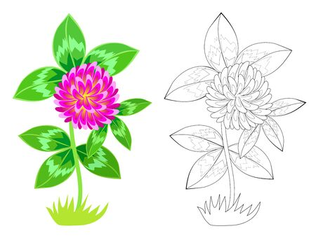Colorful and black and white pattern for coloring. Illustration of wild red clover. Meadow flower. Worksheet for coloring book for children and adults. Greetings with women day. Vector image. Illusztráció