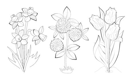 Black and white page for baby coloring book. Set of illustrations of spring flowers. Printable template for kids school textbook. Worksheet for children and adults. Hand-drawn vector image. Çizim
