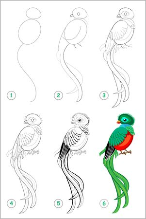 How to draw step by step cute bird quetzal. Educational page for kids. Back to school. Developing children skills for drawing and coloring. Printable worksheet for baby book. Vector cartoon image.