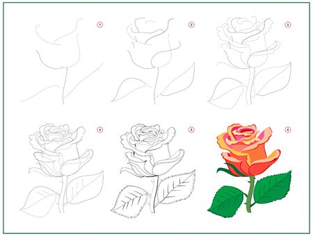Page shows how to learn to draw step by step beautiful rose flower. Developing children skills for drawing and coloring. Printable worksheet for kids school exercise book. Flat vector cartoon image.