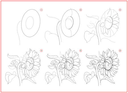 Page shows how to learn to draw sketch of sunflower. Creation step by step pencil drawing. Educational page for artists. Textbook for developing artistic skills. Online education. Ilustracja