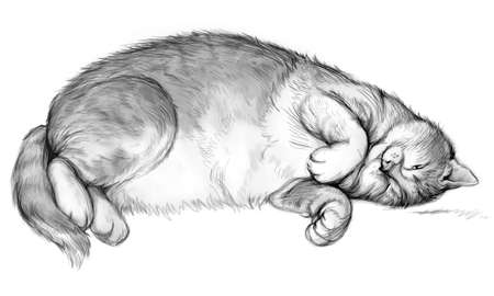 Illustration of well-fed satisfied cat. Pencil drawing. Sketch of an overeating fat kitten. Print for fabric or tattoo. Black and white image for background.