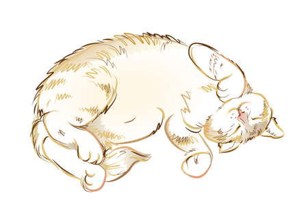 Illustration of satisfied sleeping cat. Digital drawing. Printable sketch of domestic animal. Modern print for fashionable fabric, textile, decoration, embroidery, tattoo. Hand-drawn vector.