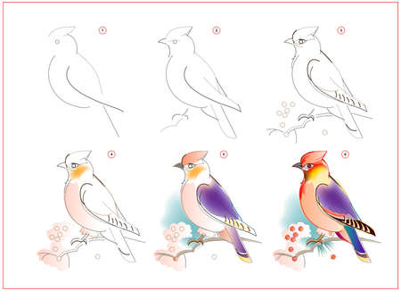 How to learn to draw sketch of waxwing bird. Creation step by step watercolor painting. Educational page for artists. Textbook for developing artistic skills. Online education.