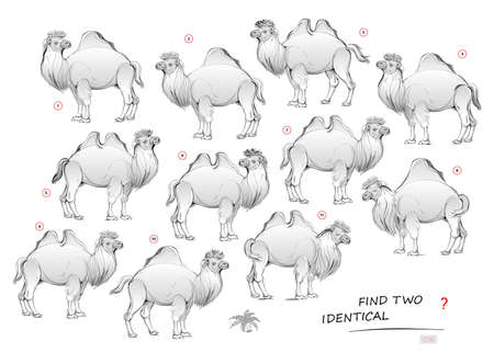 Logic puzzle game for children and adults. Need to find two identical camels. Printable page for kids brain teaser book. Developing spatial thinking skills. IQ test. Hand-drawn vector cartoon image.
