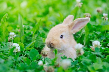 conejo: Pequeño conejo en la hierba verde