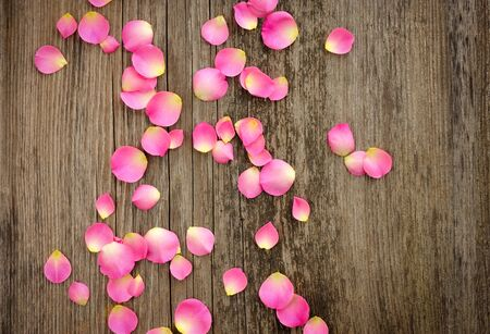 love rose: Rose petals on wooden background