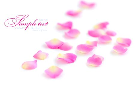 vegetative: Petals of roses on a white background