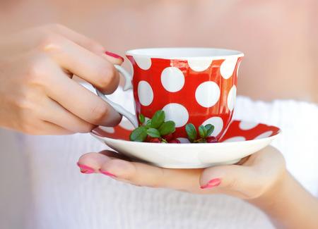mountain cranberry: Cowberry (Vaccinium vitis-idaea) tea in woman hands Stock Photo