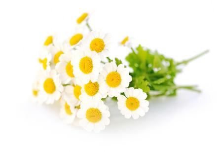 Kamille bloemen op een witte achtergrond Stockfoto