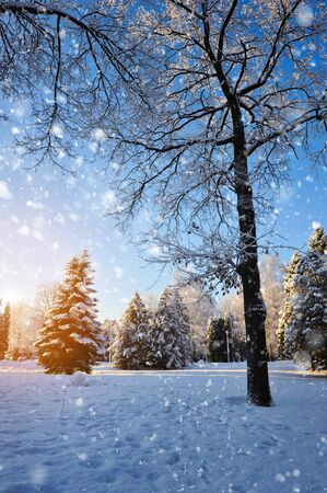 Winter forest in a frosty sunny day photo