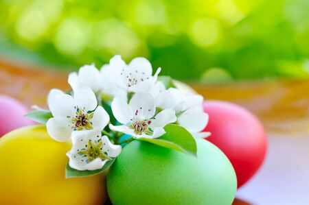eastertime: Colored easter eggs with white flowers