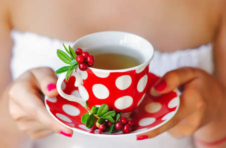 mountain cranberry: Cowberry (Vaccinium vitis-idaea) tea in woman hands Stock Photo
