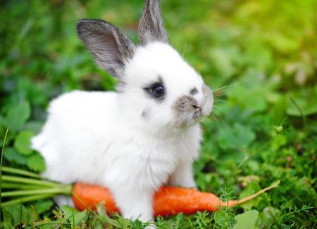 aliments droles: Drôle bébé lapin blanc avec une carotte dans l'herbe