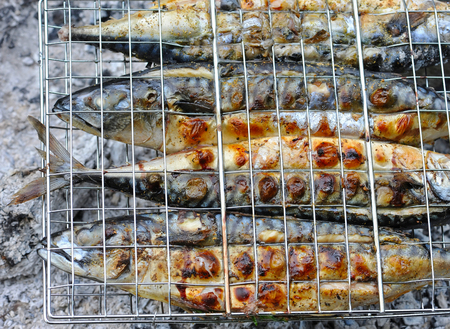 broil: Grilled mackerels on the grill on campfire