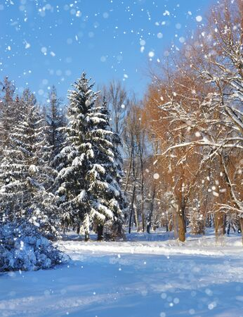 wintery day: Winter forest in a frosty sunny day