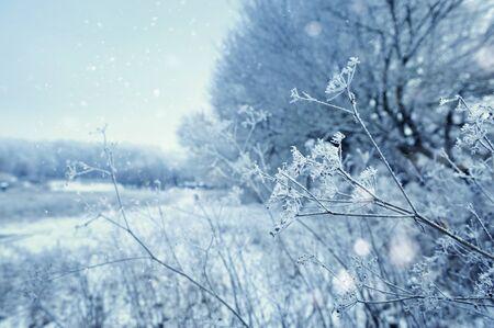 Winter landscape in frosty day