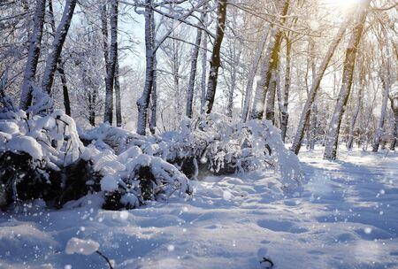 wintery day: Beautiful winter landscape with snow covered trees Stock Photo