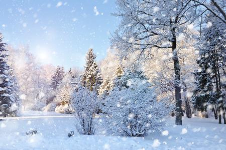 abetos: Hermoso paisaje de invierno